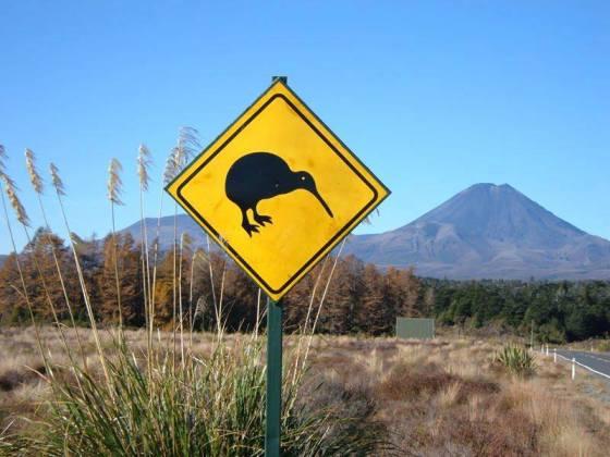 Kiwis a la vista