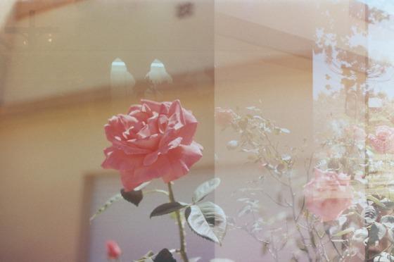 FLOWER by Reiko Ghukasyan